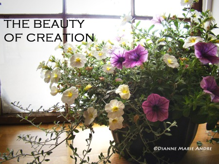 beauty of creation