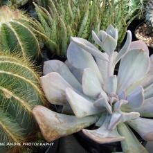 succulents3